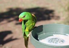 Reizender Papagei auf ihrer speisenplatte Lizenzfreies Stockbild