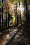 Reizender Wanderweg nannte ` ` Ibacher Panoramaweg nahe Oberibach, welches die bunte Landschaft im südlichen Schwarzen zeigt Stockfotografie