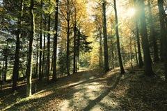 Reizender Wanderweg nannte ` ` Ibacher Panoramaweg nahe Oberibach, welches die bunte Landschaft im südlichen Schwarzen zeigt Lizenzfreies Stockbild