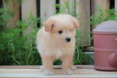 Reizender Welpe ein kleiner Hund lizenzfreie stockfotos