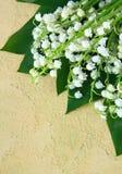 Reizendes Bündel der Lilie des Tales Stockfoto