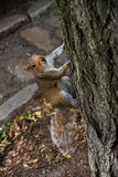 Reizendes Eichhörnchen, das beim Cimbing Baum entzückend ist stockbilder