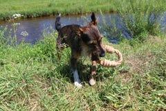 Reizendes Hundeportrait Lizenzfreie Stockfotos