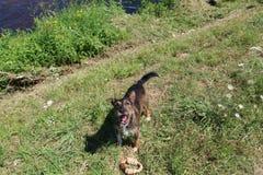 Reizendes Hundeportrait Lizenzfreie Stockfotografie