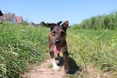 Reizendes Hundeportrait Stockfotografie