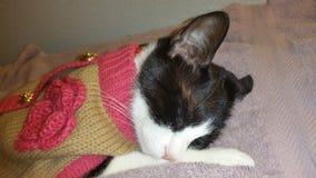 Reizendes Katzenschlafen Lizenzfreie Stockbilder