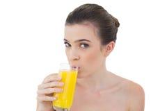 Reizendes natürliches braunes behaartes Modell, das Orangensaft trinkt Stockbild