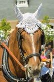 Reizendes Pferd an einer Pferdeshow Stockbild