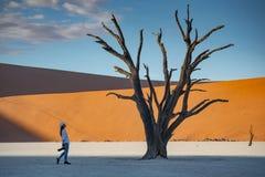 Reiziger dichtbij dode boom in deadvlei, Namibië royalty-vrije stock foto's