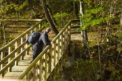 Reiziger die aard op houten brug in bos waarnemen stock foto