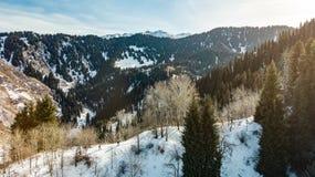 Reizigers in de bergengang op sneeuwschoenen Drie toeristen gaan langs de rand onder de bomen Het toerisme van de de winterberg stock foto