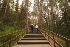 Reizigers in het bos Stock Foto
