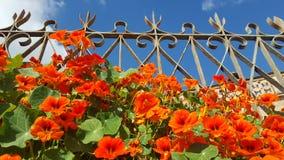 Reja, cielo y flores Imágenes de archivo libres de regalías