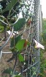 Rejilla y flores fotografía de archivo libre de regalías