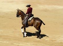 Rejoneador hing in sein Pferd ein. Stockfotografie
