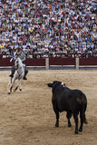 Rejoneo på den Las Ventas arenan i Madrid. Rejoneador: Sergio Galan Royaltyfria Bilder