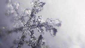 Rek die zich over kristaltakken concentreren van sneeuwvlok stock videobeelden