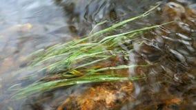 Rek van een rivier en algen stock videobeelden
