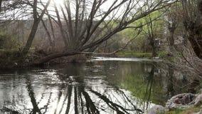 Rek van een rivier en bomen stock footage