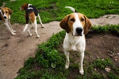 Rek van honden van honden Royalty-vrije Stock Afbeeldingen
