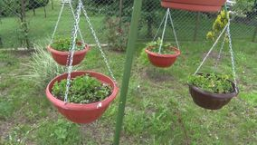 Rek voor vier decoratieve bloemen in de tuin stock video