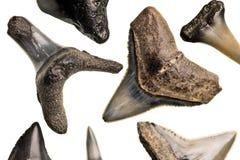 rekinów zęby Zdjęcie Royalty Free
