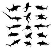 Rekin Obrazy Stock