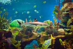 rekin Obraz Stock