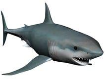 rekin Obrazy Royalty Free