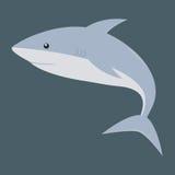 rekin błękitny Obrazy Royalty Free