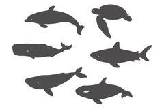 Rekin, Denny żółw, delfin i wieloryby, Fotografia Royalty Free