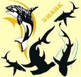 rekin plemienny Zdjęcia Stock