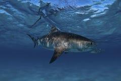 rekin wizyta obrazy stock