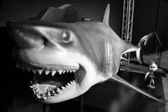 Rekin z otwartym usta Zdjęcie Stock