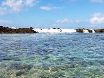 Rekin zatoczka Zdjęcie Royalty Free
