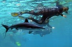 Rekin zatoka w Dennym Światowym złota wybrzeżu Queensland Australia Obrazy Stock
