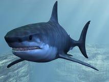 rekinu wielki biel Fotografia Stock
