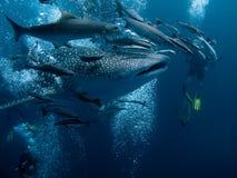 rekinu wieloryb Fotografia Stock