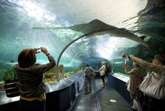 Rekinu zbiornik przy Ripley akwarium Kanada zdjęcia stock