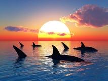 rekiny Obrazy Royalty Free