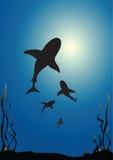 rekiny Obrazy Stock