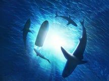 rekiny tworzy okrąg pod łodzią w wodzie fotografia royalty free