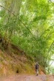 Rekonesansowy bujny zieleni bambusa las Zdjęcia Royalty Free