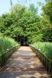 rekonesansowy las Zdjęcia Stock
