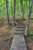 rekonesansowy las Obrazy Royalty Free