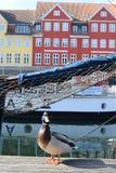 Rekonesansowy nyhavn kana? w Kopenhaga mie?cie Dani fotografia stock
