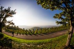 Rekreation i vingårdarna royaltyfria bilder