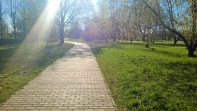 Rekreationsområde parkerar, går, värme solstrålar, träd, våren, solljus, trevligt väder royaltyfri foto