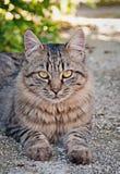 Relájese de un gato Foto de archivo libre de regalías