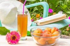 Relájese en el jardín floreciente en un día de verano soleado Foto de archivo